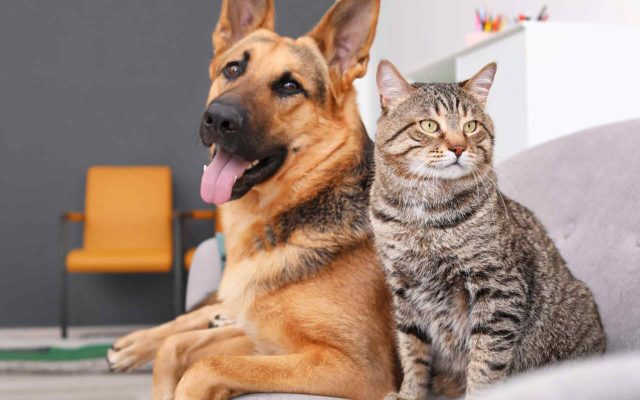 Cat Health – Keeping Them Purr-fect