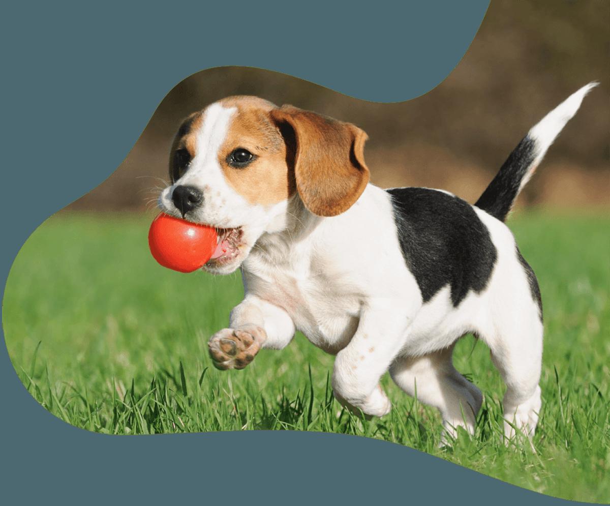 https://adorablebulldogs.com/wp-content/uploads/2019/07/hero_image_01.png